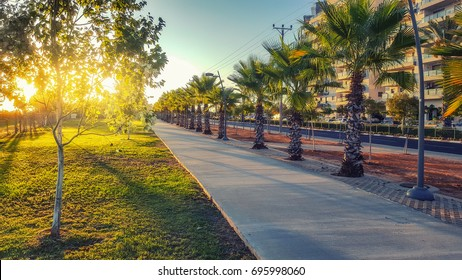 Empty concrete paved sidewalk at early morning. In the left there are green lawn and trees flooded by sunrise. In the right there are palms, asphalt road and multi-story condominiums. Horizontal shot