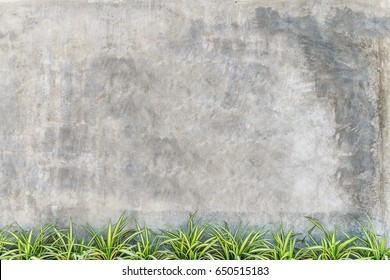 Empty concrete shop wall with green plant at bottom,Leave space for display or montage of design,content or logo
