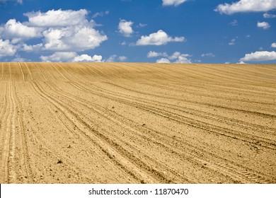 An empty cornfield in early spring.