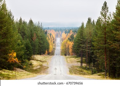 Empty country road in forest in autumn in Finnish Lapland