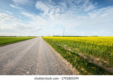 Empty country road through the blooming yellow rapeseed field against cloudy blue sky, Latvia. Idyllic rural scene. Agricultural, fuel and food industry, alternative energy, environmental conservation