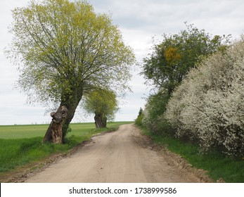 Empty countryside road through spring fields and trees