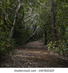 Empty dark abandoned asphalt road covered with fallen leaves goes through scary forest, square background photo