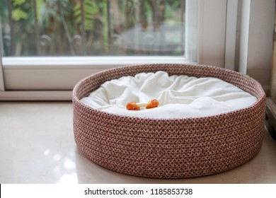 An empty dog bed basket with only dog bone snack left on the bed with copy space; concept for missing dog