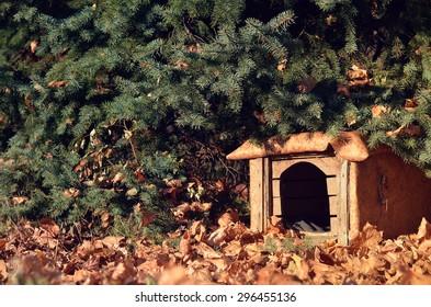 Empty dog house under pine tree in autumn