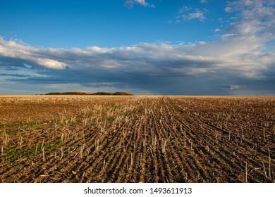 Empty field after harvesting in sunny day. Mowed wheat field  uat sunset, Czech Republic