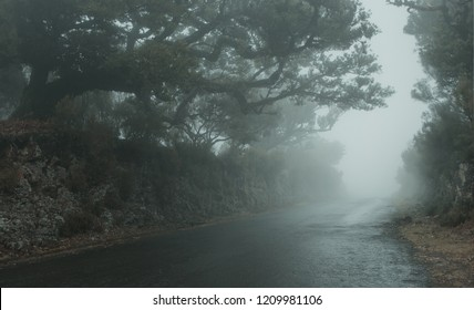 Empty foggy road on  Madeira island with copy space