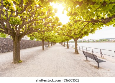 Empty footpath along Rhine river in Bonn. There are two rows of trees with green leaves, and some benches to take a seat. In the bottom of the image there is a lot of free space to add some text.