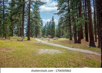 Empty footpath at a park near Reno, Nevada