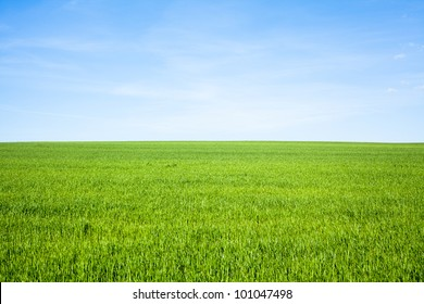 Empty Grass Field with Blue Sky