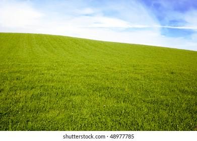 empty grass field under blue sky