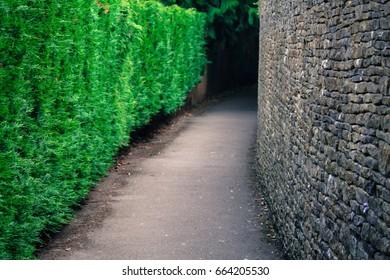 Empty Green Street