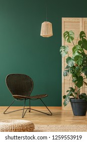 Empty green wall of elegant living room interior with wicker stylish armchair and rattan chandelier, real photo with copy space and monster plant in black pot