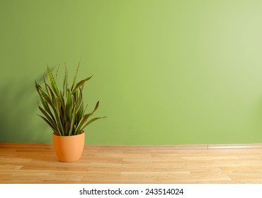 empty interior with wooden floor, flower and green wall