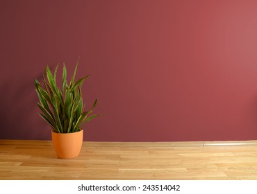 empty interior with wooden floor, flower and red wall