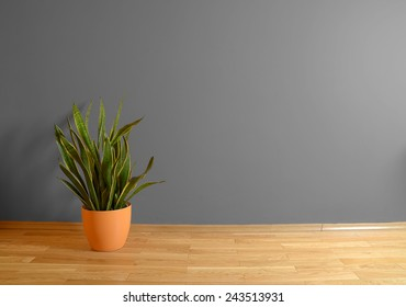empty interior with wooden floor, plant and grey wall