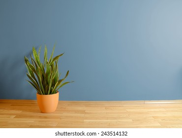 empty interior with wooden floor, plant and blue wall