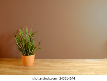 empty interior with wooden floor, plant and brown wall
