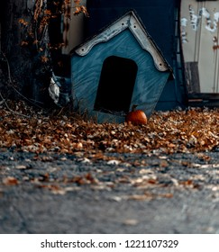 Empty junkyard dog house in the fall with a pumpkin
