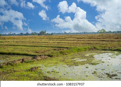 Empty land plot in rural area, rice field with rain water, swamp after harvesting landscape, white cloudy sky.  Agricultural, soil management, farmer and land for sales concept background