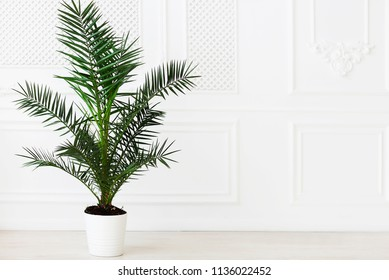 The empty in light tones room with palm plant near the wall