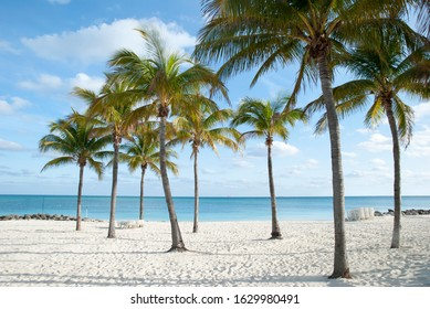 The empty Lucaya Beach with palm trees in late afternoon (Freeport, Grand Bahama Island).