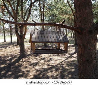 An empty manger for birds on the tree branch. Protection of animals and animal care concept.