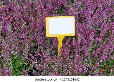 Empty message card in purple flowers bloom