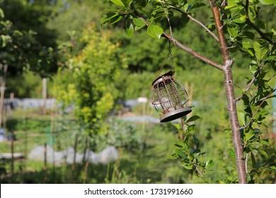 Empty metal bird feeder hanging from a tree branch