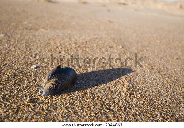 Empty muscle shell lies discarded on a beach.