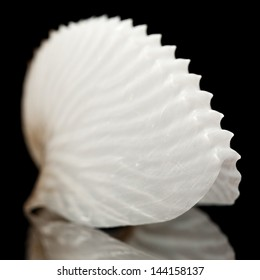 empty octopus (Argonauts, or paper nautiluses) shell on black mirror
