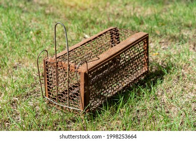 Empty  old steel cage for mousetrap placed on  green grass. The rat trap is stil - Shutterstock ID 1998253664