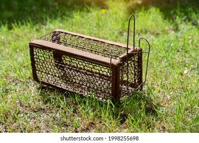Empty  old steel cage for mousetrap placed on  green grass. The rat trap is stil - Shutterstock ID 1998255698