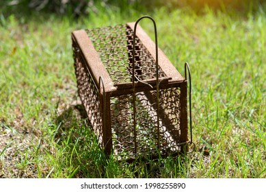 Empty  old steel cage for mousetrap placed on  green grass. The rat trap is stil - Shutterstock ID 1998255890