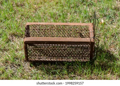 Empty  old steel cage for mousetrap placed on  green grass. The rat trap is stil - Shutterstock ID 1998259157