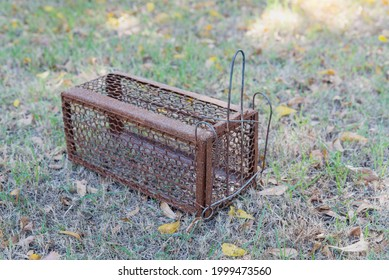 Empty  old steel cage for mousetrap placed on  green grass. The rat trap is stil - Shutterstock ID 1999473560