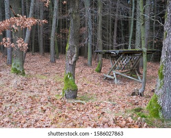 empty old wooden feeder or manger for wild animals in the forest. Feeding trough with hay for wild boars, deer and birds in the late atumn beech forest.