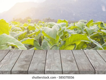 Empty old wooden table with garden and mountain background.