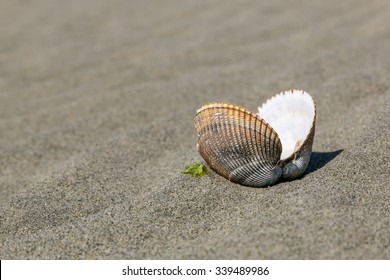 Empty open clam shell sitting on top of the sand at the beach