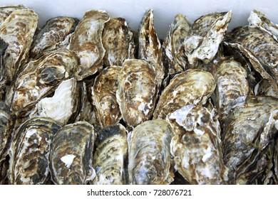 Empty oyster shells japan.