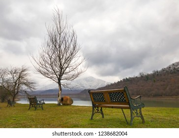 Empty park bench with barren tree and