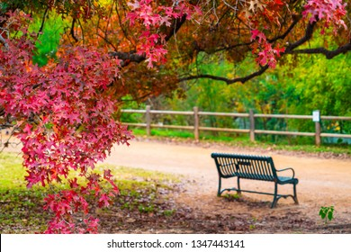 empty park bench surrounded by Red autumn leaves and colorful changing leaves drop fall season in Austin Texas , a historic colorful autumn in Texas hill country capital city of Austin Texas
