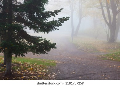 Empty park at foggy autumn morning