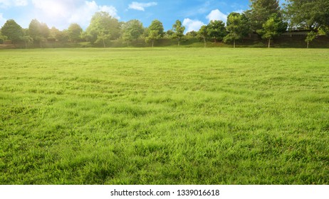 empty park with green grass field and tree in sunshine morning, nobody recreation landscape with blue sky