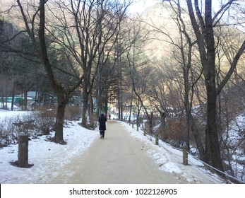 Empty path or alleyway or walkway in wooden avenue with two rows of trees sides with snow on both sides in cold and sunny winter day