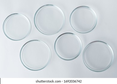 empty petri dishes on a white table