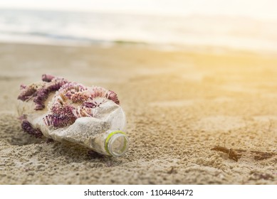 Empty plastic bottle on the beach. Concept of no garbage on beach; copy space.