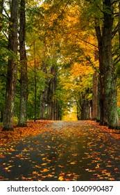 Empty raod leading through peak fall foliage in Vermont