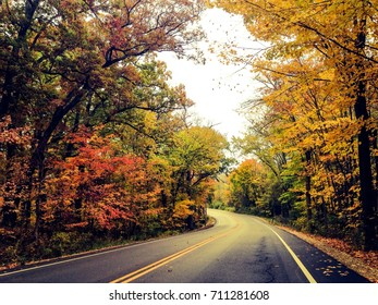 Empty road along with maple trees