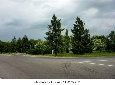 An empty road intersection and trees growing along it in a gloomy cloudy day.